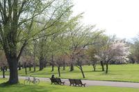百合が原公園の花たち。春を待ち焦がれていました。 - ワイン好きの料理おたく 雑記帳