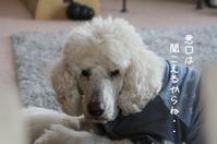 いいじゃないか、老犬だもの - gin~tetsu~nosuke