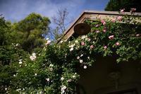 薔薇の香りに包まれた英国庭園 - Soul Eyes