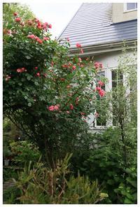 Rose garden - natu     * 素敵なナチュラルガーデンから~*     福岡で庭造り、外構工事(エクステリア)をしてます