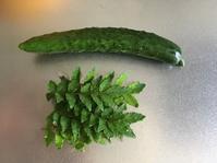 胡瓜初収穫と今日のtea♪ - いととはり