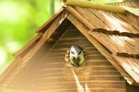 シジュウカラの巣立ち - Naturfreude