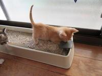 やんちゃでござる。 - 世帯主は猫なんです。