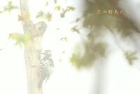 オオアカゲラ - 北の野鳥たち