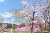お花見 - 藍の郷