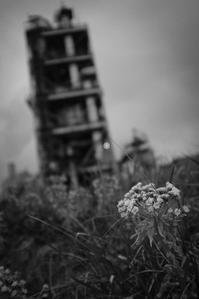五月雨を見上げるふきのとうと赤錆の塔 - Film&Gasoline