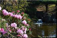 春の便り2(平岡樹芸センター) - 北海道photo一撮り旅