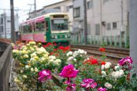 荒川区荒川/町屋/荒川沿線のバラ - 東京雑派  TOKYO ZAPPA
