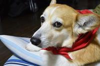 お隣さん - むーちゃんパパのブログ4