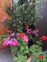 お花やグリーン - 黒豆日記