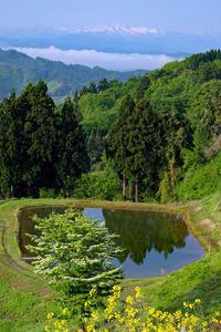 棚田と花(金倉山) - くろちゃんの写真
