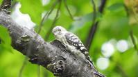 5/12野川公園 - 山と鳥を愛するアナパパ