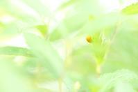 幸せの黄色い天道虫 - 心 色