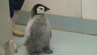 Hello!エンペラーペンギン - aws0607の写真コーナー