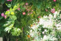 ★ 桜の見頃は学校が始まってからでいい - うちゅうのさいはて