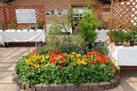 『ハーブ展』『オープンカフェ』開催! - 手柄山温室植物園ブログ 『山の上から花だより』