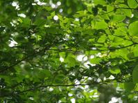 林を行く - hibariの巣