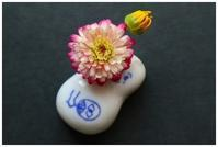 ひょうちゃんに花を -  one's  heart