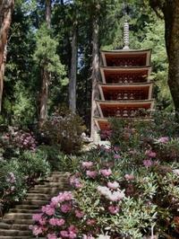 石楠花のみ寺(a temple on a mountain with rhododendrons) - ももさへづり*やまと編*cent chants d'une chouette (Yamato*Japon)