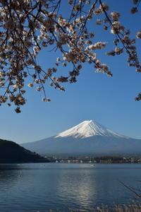 富士五湖の四季-春ー - フォト・フレーム  - 四季折々 -