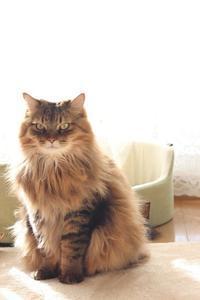 繰り返された掃除 - きょうだい猫と仲良し暮らし