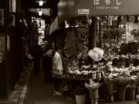Snap No291 - 東京Shy 写歩く