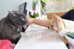 看板猫とごあいさつ - ニコンのお写んぽ日記