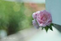 The Rose **** - Berry's Bird