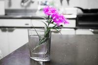 食卓に花を飾って朝食を・・・ - スポック艦長のPhoto Diary