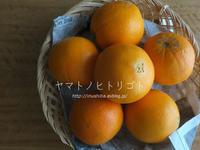 3月の雑記録&写真の断捨離 後編【フォトムービーあり】 - yamatoのひとりごと