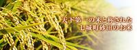 砂田米今年も無農薬栽培の『砂田のれんげ米』です!(れんげの鋤き込み作業2018) - FLCパートナーズストア