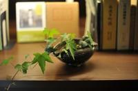 ユキノシタ - 櫨ノ谷便り