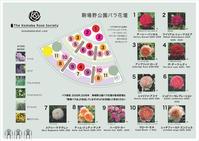 駒場野公園バラ花壇メディアボード - 駒 場 バ ラ 会 咲く 咲く 日 誌