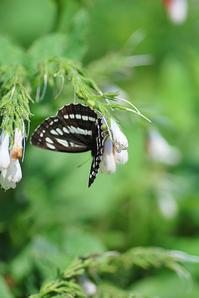 5/12庭にくる蝶と母の日自分用 - 「あなたに似た花。」