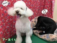 店長の日記〜dog&cat〜 - トリミングサロンオリーブスタッフ日記