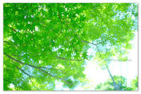 新緑の京都。 - Yuruyuru Photograph