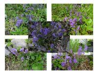 群馬の山里、春の草花(パート2) - 折々の記