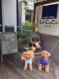 わんことランチ@CHARCUTERIE Le Co Co (荻窪) - shoot !!