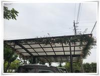 バラの駐車場の屋根一周仕立て - せわぁない  なんくるないさ