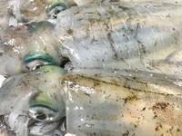 水イカ、やっぱり美味しい!! - よつばの出張写真屋~yotsubanoie~