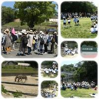 年中組遠足👟 - ひのくま幼稚園のブログ