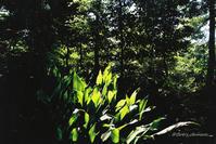 燃ゆる緑 - BobのCamera