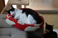 大物 - Black Cat Moan