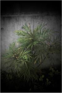 1965ほのか(2017年11月19日キノプラズマート25mmF1.5bで高畑町散歩) - レンズ千夜一夜