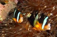 18.5.15 マイッた(ってました。) - 沖縄本島 島んちゅガイドの『ダイビング日誌』