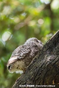末っ子雛の巣立ち - 気ままに野鳥観察