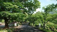 がま口ショルダーバック - 優駿、大樹の下で和を奏でる~平屋暮らし*時々handmade~