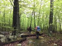 新緑のハイキング - 玄米菜食 in ニュージャージー