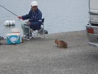 漁師町の猫事情 - その男、養殖に就き