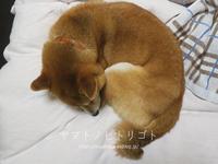 添い寝【動画あり】 - yamatoのひとりごと